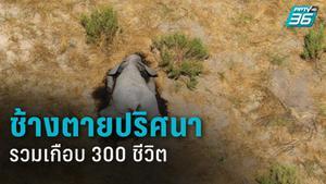 ช้างหลายร้อยตัวตายปริศนาต่อเนื่อง 2 เดือนในบอตสวานา-ยังไม่ทราบสาเหตุ