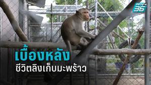 """เปิดเบื้องหลัง ชีวิต """"ลิงเก็บมะพร้าว"""" หลังปลดระวาง"""