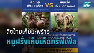 """""""อรรถวิชช์"""" โต้ """"PETA"""" ดราม่าลิงเก็บมะพร้าว ฝรั่งใช้หมูเก็บเห็ดทรัฟเฟิล"""