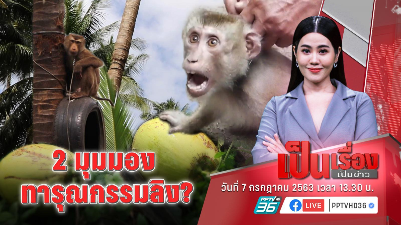 ฟัง 2 มุมมองการใช้ลิงเก็บมะพร้าวในไทย