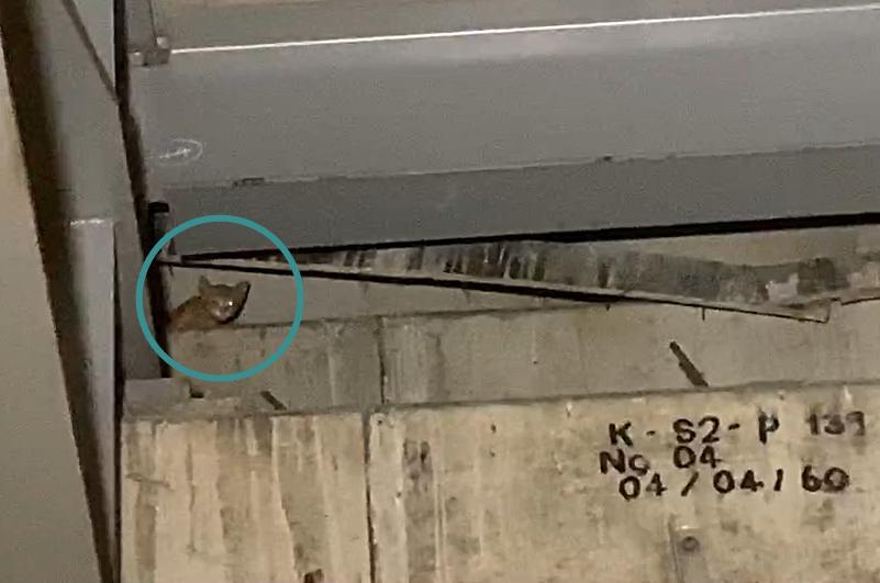 ทาสแมวลุ้น! เหมียวติดใต้สะพาน  4 วัน จนท.ช่วยกันเต็มที่ ยังพาลงมาไม่ได้