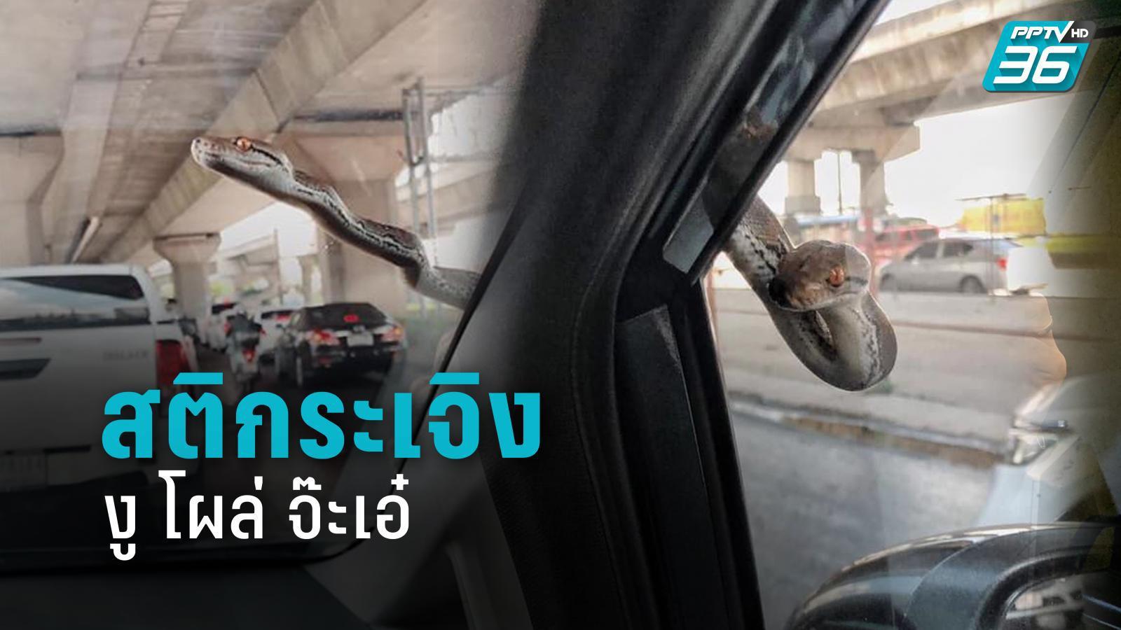 แทบช็อก! ขับรถอยู่ดีๆ 'งู' มาจากไหน โผล่จ้องตาเขม็ง