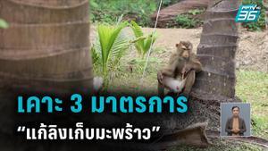 """ก.พาณิชย์ เคาะ 3 มาตรการ  """"แก้ปัญหาลิงเก็บมะพร้าว"""