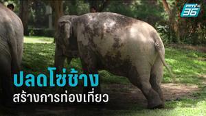 ปลดโซ่ช้าง สร้างการท่องเที่ยวอย่างยั่งยืน