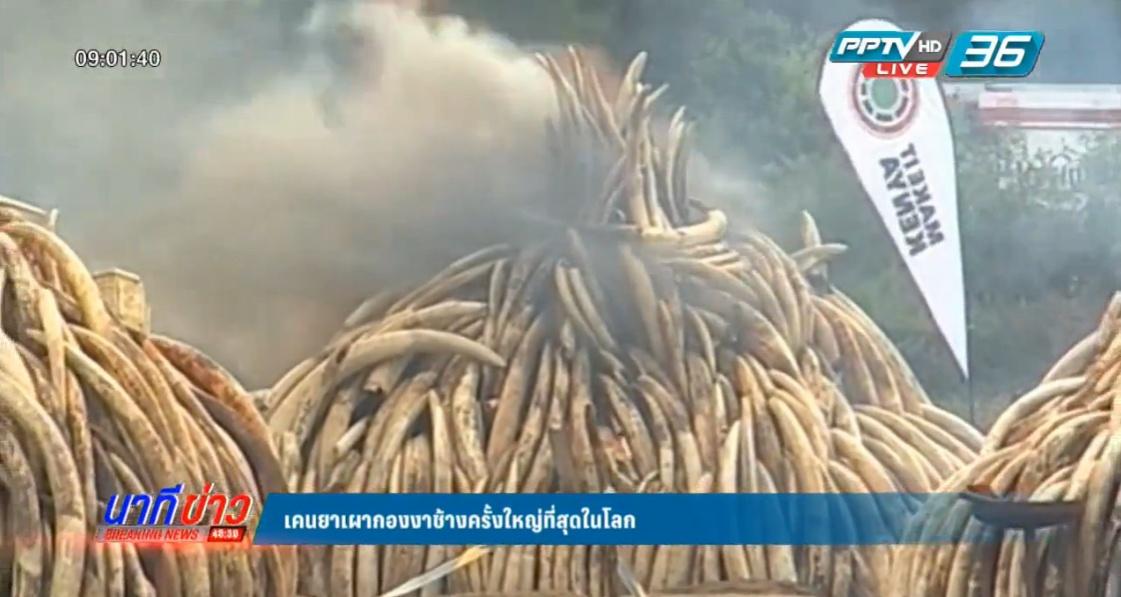 เคนยา เผากองงาช้างครั้งใหญ่ที่สุดในโลก