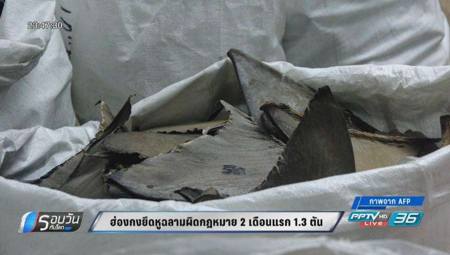 ฮ่องกงยึดหูฉลามผิดกฎหมาย  2 เดือนแรกจำนวน 1.3 ตัน