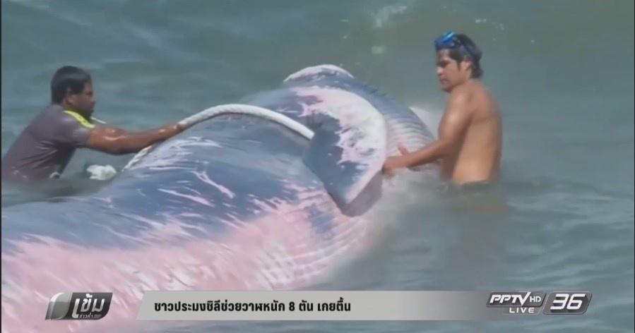 ชาวประมงชิลีช่วยชีวิตวาฬหนัก 8 ตัน เกยตื้น