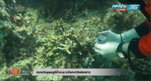 ตรวจวัดอุณหภูมิน้ำทะเล ระวังปะการังฟอกขาว