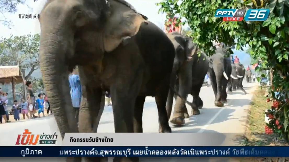 """ทั่วประเทศจัดกิจกรรม """"วันช้างไทย"""" คึกคัก"""
