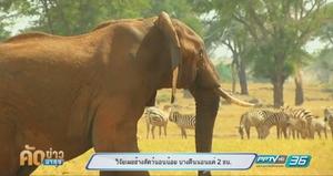 งานวิจัยเผยช้าง เป็นสัตว์นอนน้อย บางคืนนอนแค่ 2 ชม.