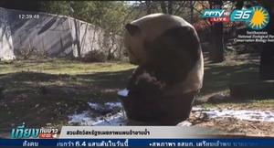 สวนสัตว์สหรัฐฯเผยภาพแพนด้าอาบน้ำ (คลิป)