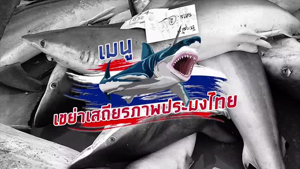 เมนูฉลาม เดิมพันการอยู่รอด อุตสาหกรรมประมงไทย