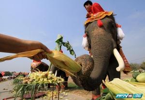 """จัดเต็มเลี้ยง """"โต๊ะจีนช้าง"""" รับวันช้างไทย 13 มี.ค. นี้"""