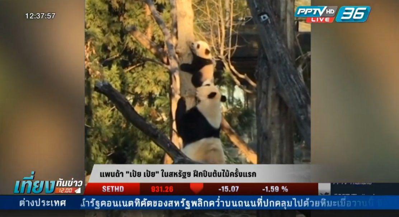 """แพนด้า """"เป้ย เป้ย"""" ในสหรัฐฯ ฝึกปีนต้นไม้ครั้งแรก"""
