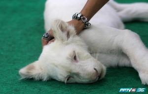 """""""คนรักสัตว์แปลก """" ไม่ควรพลาด ชมและเติมความรู้กันจุใจ ที่งาน """"Exotic Pets Expo"""""""