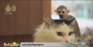 แม่แมวรับลิงเป็นลูกบุญธรรม (คลิป)