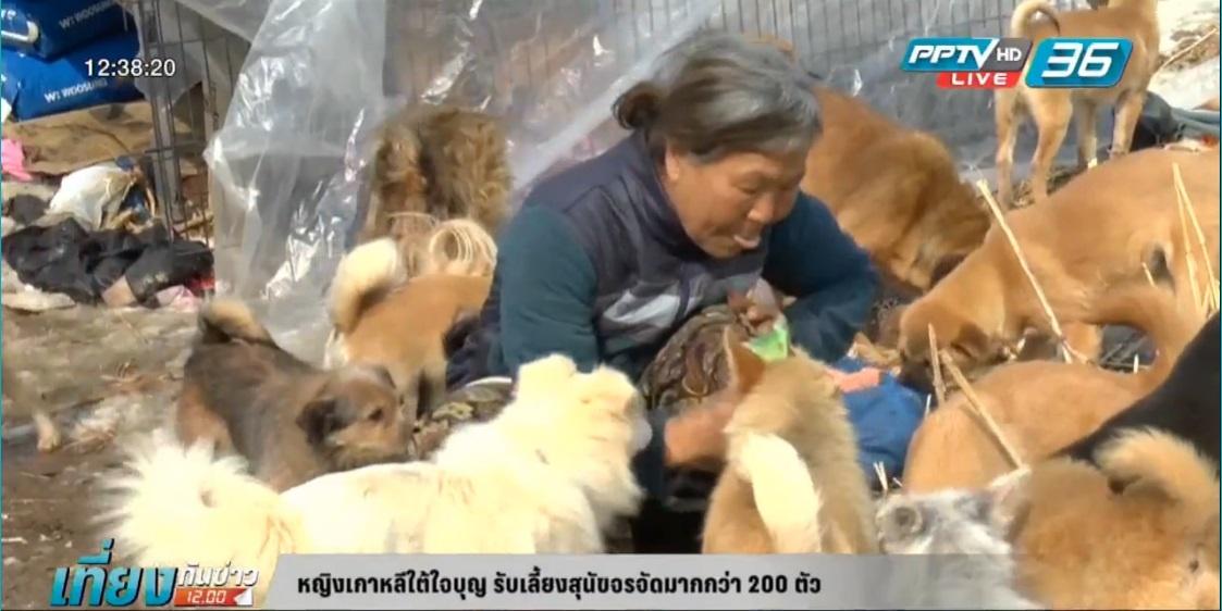 หญิงเกาหลีใต้ใจบุญ รับเลี้ยงสุนัขจรจัดมากกว่า 200 ตัว