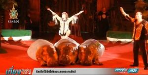 รัสเซียใช้ฮิปโปร่วมแสดงละครสัตว์