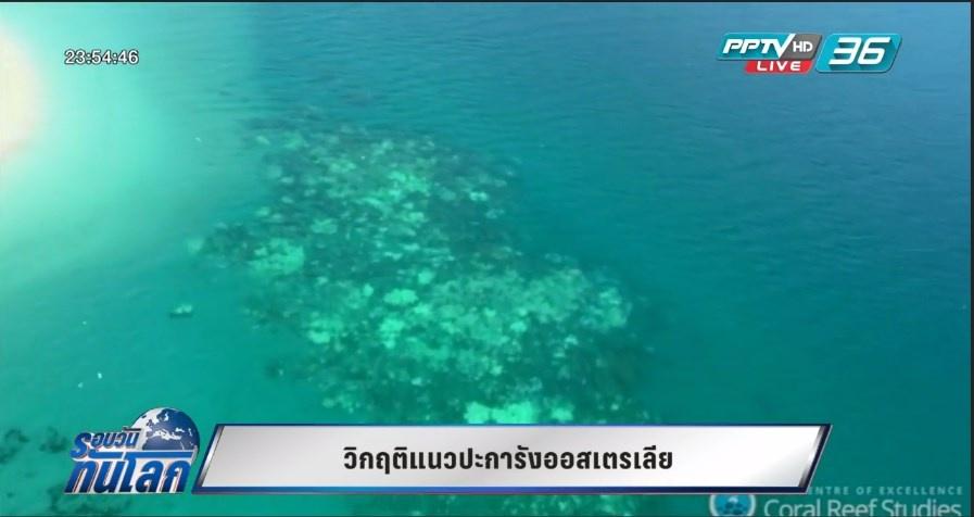 วิกฤตแนวปะการังออสเตรเลีย (คลิป)