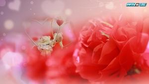 """ล้วงหัวใจหนุ่มสาวกับมุมมองความรักของแต่ละคน ต้อนรับ """"วันแห่งความรัก"""""""