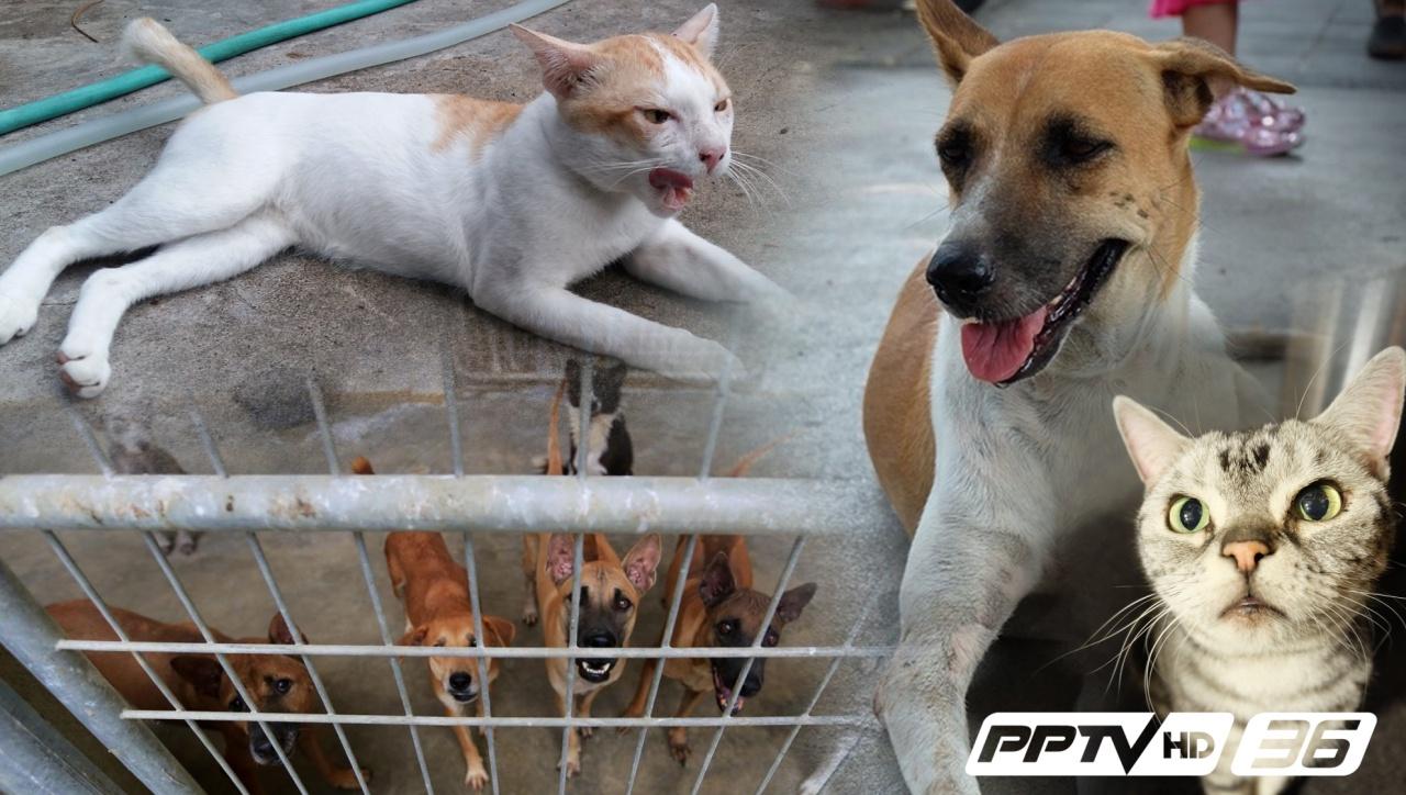 """""""ทาสหมา-ทาสแมว"""" อย่าชะล่าใจ หากถูกกัด-ข่วน ระวัง """"โรคเนื้อเน่า"""""""