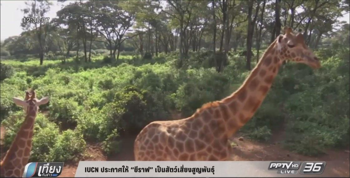 "IUCN ประกาศให้ ""ยีราฟ"" เป็นสัตว์เสี่ยงสูญพันธุ์"
