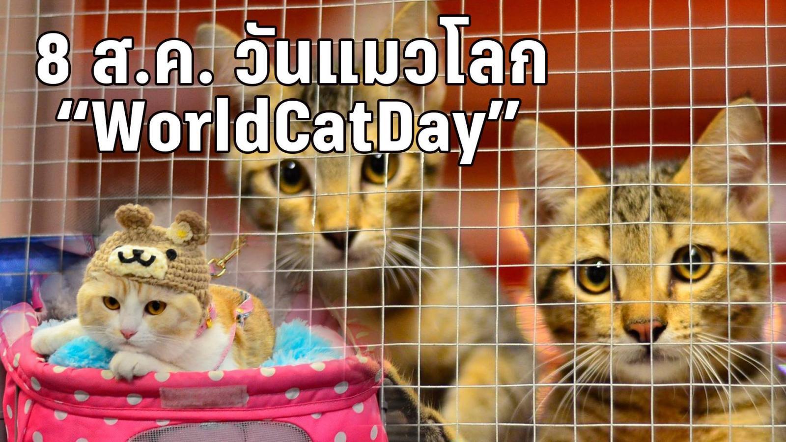 """เมี๊ยว! 8 สิงหาคม """"วันแมวโลก"""" มาดูแลเจ้าเหมียวกันเถอะ"""