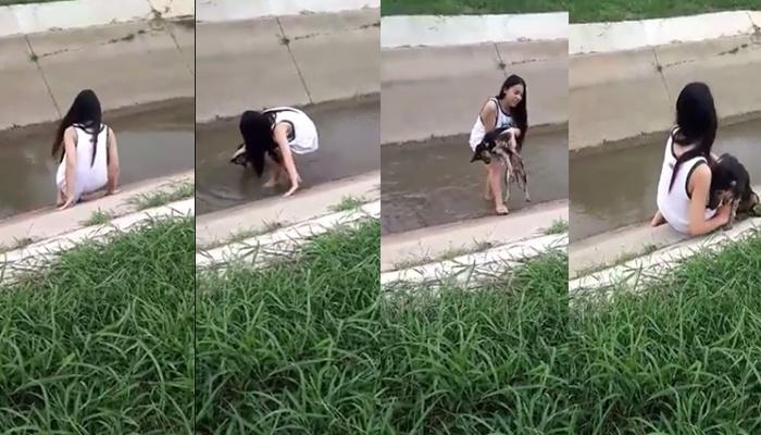 สาวประเภทสองน้ำใจงาม! ช่วยสุนัขพิการขึ้นจากคลอง (คลิป)