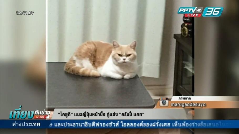 """""""โคยูกิ"""" แมวญี่ปุ่นหน้าบึ้ง คู่แข่ง """"กรัมปี้ แคท"""""""