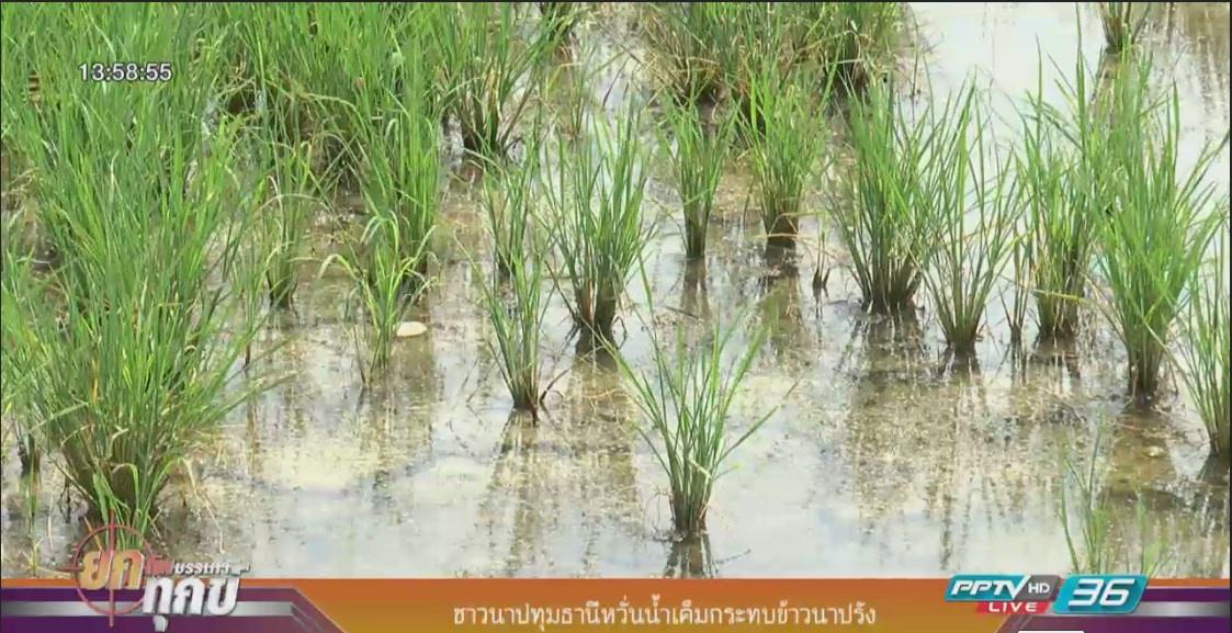 ชาวนาปทุมธานีหวั่นน้ำเค็มกระทบข้าวนาปรัง
