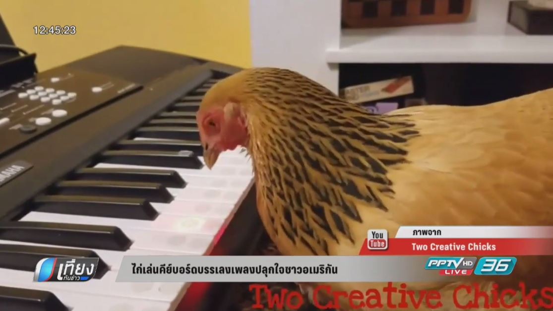 ไก่เล่นคีย์บอร์ดบรรเลงเพลงปลุกใจชาวอเมริกัน (คลิป)