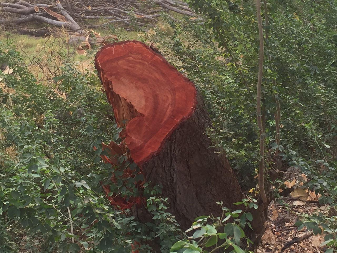 """ตัดอุโมงค์ต้นไม้ กระทบ """"สัตว์ป่าคุ้มครอง"""""""