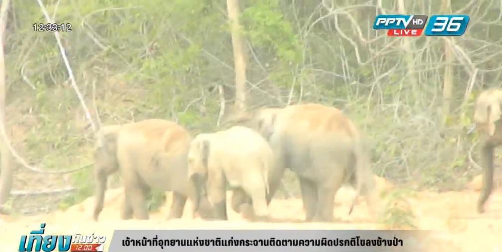 ติดตามความผิดปกติโขลงช้างป่าแก่งกระจาน