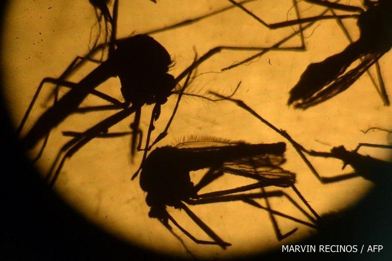 จีนพบชายวัย 34 ปี ติดเชื้อไวรัสซิการายแรกของประเทศ