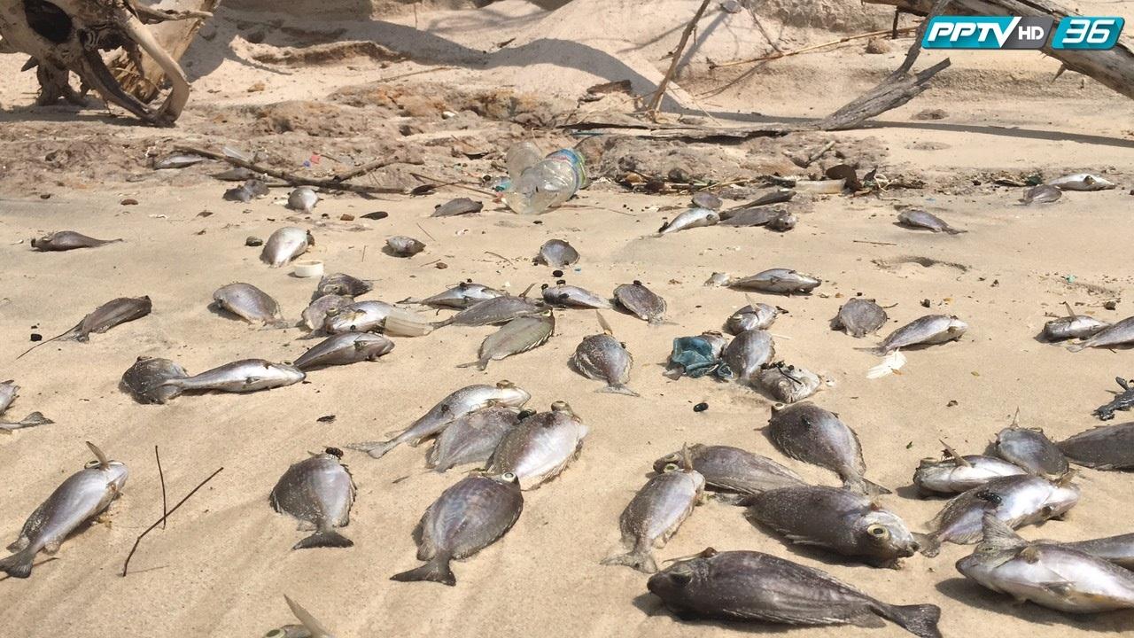 พบปลาตายเพิ่มที่มาบตาพุด ยังไร้คนจัดการ  (คลิป)