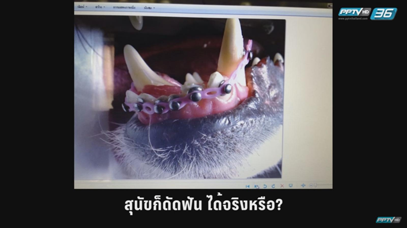 ตอบทุกข้อสงสัยทำไมสุนัขถึงต้องจัดฟัน!! ตอนที่ 1