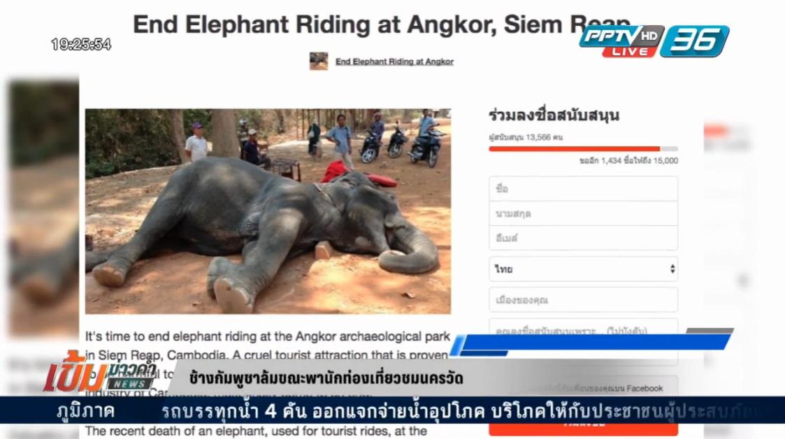 ช้าง กัมพูชาล้มขณะพานักท่องเที่ยวชมนครวัต