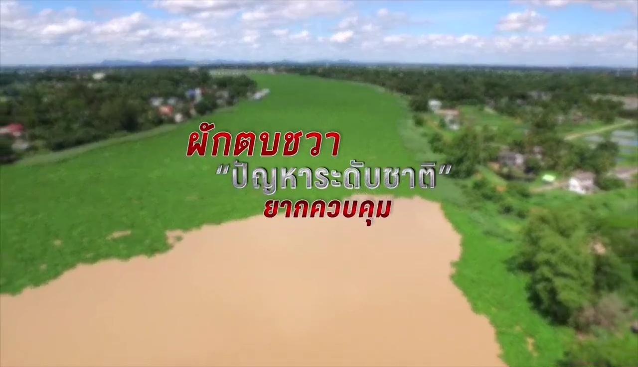 เส้นทางผักตบชวาสู่แม่น้ำเจ้าพระยา