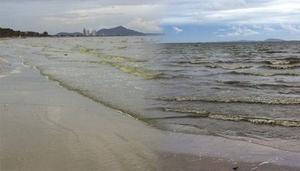 น้ำทะเลหาดบางแสนเปลี่ยนสี หลังแพลงก์ตอน บลูม มาเยือน!