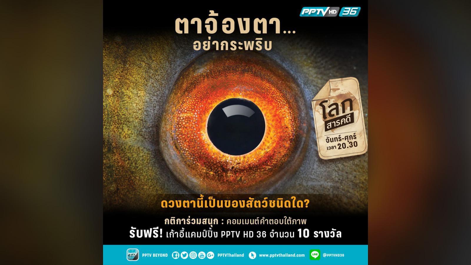 """เฉลยแล้ว !! ดวงตากลม นัยน์ตาสีแดงส้ม คือ """"ปลาเทนซ์"""""""