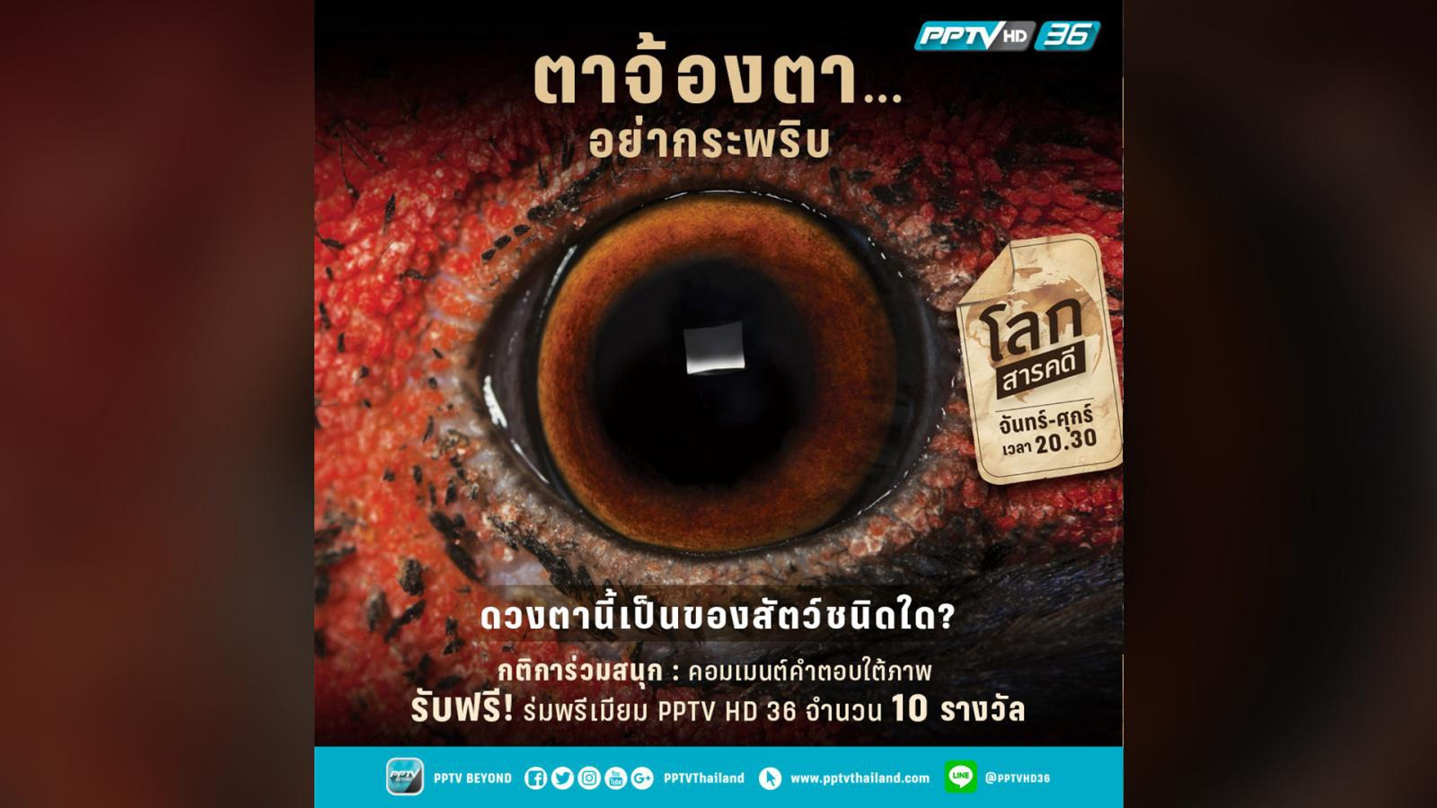 """เฉลยแล้ว!! ดวงตาของสัตว์ที่มีสีสันงามจับตา จะงอยปากและขาแข็งแรง คือ """"ไก่ฟ้า"""""""