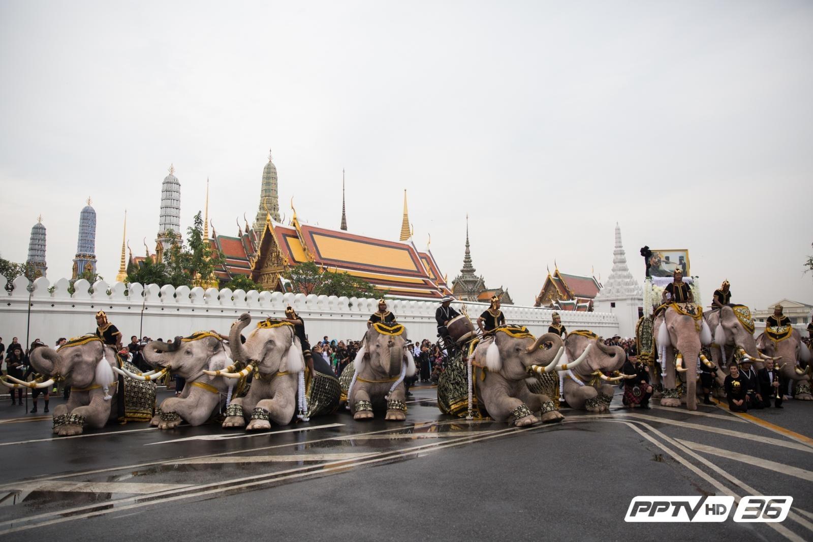ช้าง 11 เชือก น้อมถวายความอาลัย (คลิป)