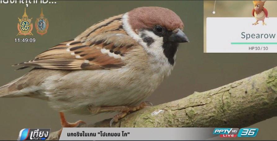 นกจริงในเกม โปเกมอน โก  (คลิป)