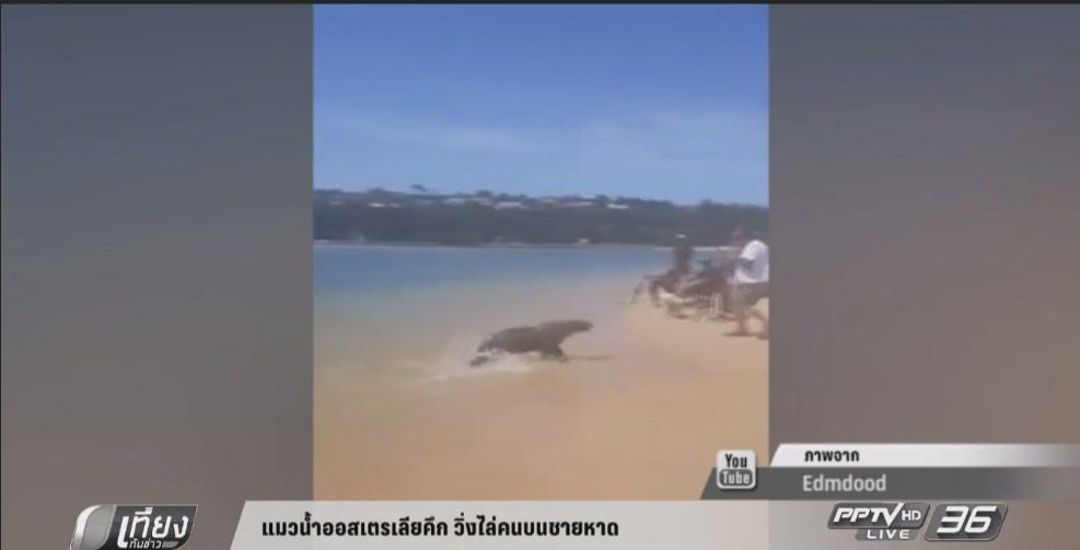 แมวน้ำออสเตรเลียคึก วิ่งไล่คนบนชายหาด