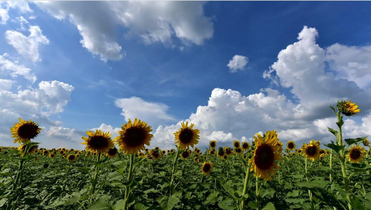 อุตุฯ ชี้วันนี้พายุฤดูร้อนมีแนวโน้มลดลง