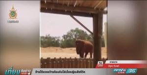 ช้างใช้งวง ขว้างก้อนหินใส่เด็กหญิงเสียชีวิต