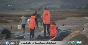 พบวาฬฝูงใหม่อีก 240 ตัว เกยตื้นบนหาดในนิวซีแลนด์ (คลิป)