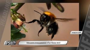 วิจัยเผยประชากรแมลงลดลง 3 ใน 4 ในรอบ 30 ปี