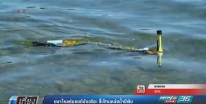 หุ่นยนต์ปลาไหลอัจฉริยะ ชี้เป้าแหล่งน้ำมีพิษ
