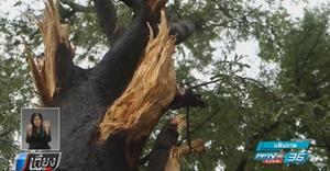 """""""ผู้ว่าฯกทม."""" สั่งสำรวจพื้นที่เสี่ยงต้นไม้ใหญ่ หลังเกิดเหตุต้นไม้หักโค่น"""